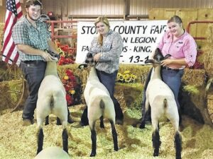 Stokes County Fair Livestock Winners