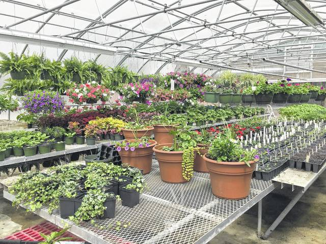 The Stokes News North Stokes Plant Sale Kicks Off April 18